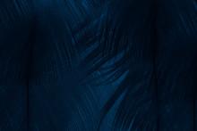 Beautiful Macro Dark Blue Feat...