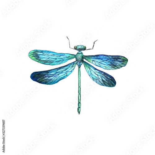 Photo watercolor hand-drawn dragonfly insect belonging to the order Odonata, infraorde