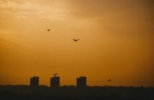 Orange Sunset Sky And Birds Ov...