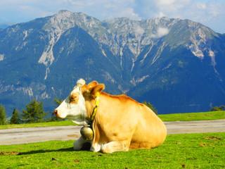 Alpenkuh Milchkuh frei und artgerecht