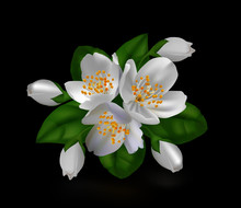 White Jasmine Isolated On Blac...