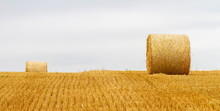 Big Round Bales Of Straw In A ...