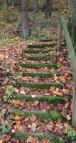 Photo Moss and leaf covered stony stairs lead upwards to a forest path with a wodden h