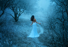 Woman In White Creative Sexy Long Dress Sik Train Bare Back Walks In Winter Fantasy Forest. Snow Queen Turned Away, Brunette Hair Fly Wind. Backdrop Black Tree Trunks Branches Grass Covered Frost Fog