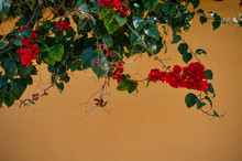 Red Bougainvillea Against A Ye...