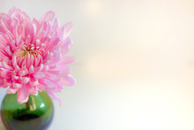 A Fresh, Pink Chrysanthemum Flower In A Small Green Vase Against A White Background, With Copy Space