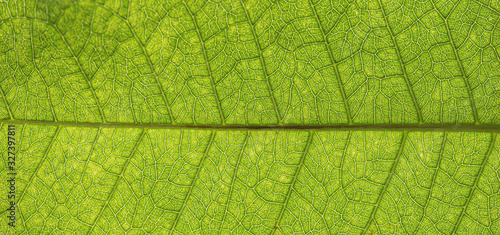 Tree green leaf texture close up for background #327397811