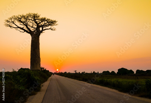 Fototapeta Stunning sunset with silhouette of majestic baobab tree in foreground, Morondava
