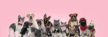 Large Team Of Domestic Animals...