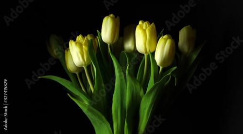 Fotografia Vista da vicino di bei tulipani gialli freschi isolati su sfondo scuro