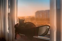 Gato Atigrado Acostado En Una Hamaca Pegada A La Ventana, Contempla La Puesta De Sol
