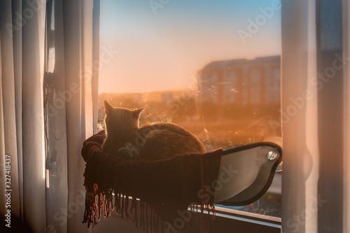 gato atigrado acostado en una hamaca pegada a la ventana, contempla la puesta de Fototapeta