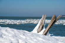 Weathered Driftwood Logs In Sn...