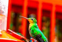 A Green Orange Hummingbird Fro...