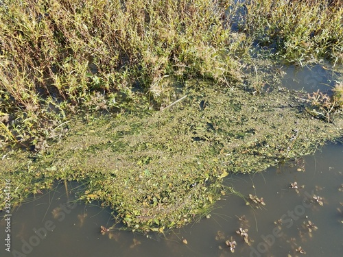 Fotografija stagnant lake or pond water with green plants
