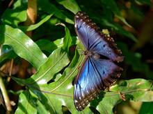 Butterfly On Leaf In Sunlight ...