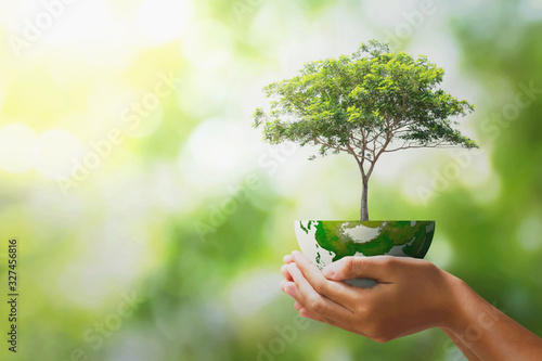 Fototapeta hand holding tree with half globe an d sunlight. concept eco earth day obraz