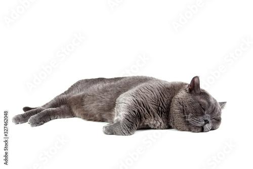Funny sleeping cat Canvas-taulu