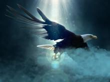 Bald Eagle Flying Over The Clouds 3d Illustration