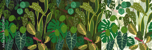 Set of seamless patterns with tropical indoor plants on a dark, green and light background Canvas Print