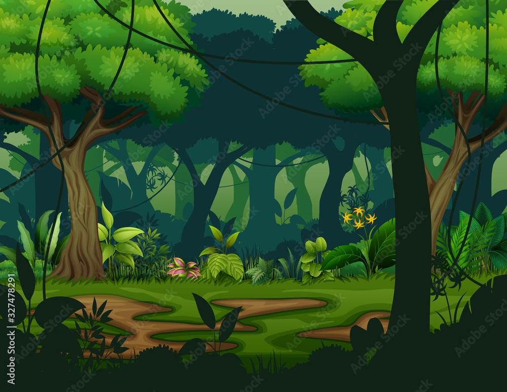 Fototapeta Dark rainforest with trees background