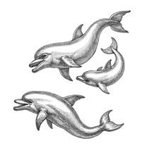 Hand Drawn Illustration, Three...