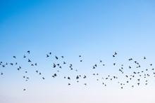Birds Flying In The Sky, A Flo...