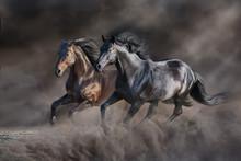 Two Horse Run Gallop In Desert...