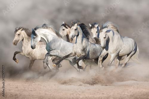 Fototapeta herd of horses obraz