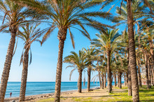 Palm Trees. Torremolinos, Andalusia, Spain