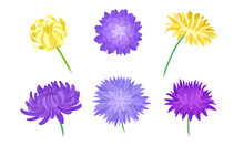 Yellow And Purple Aster Flowers On Stems Vector Set