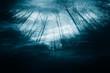 Leinwanddruck Bild night in dark mysterious forest, dark halloween background