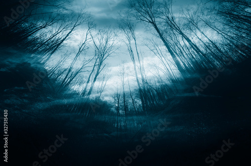 night in dark mysterious forest, dark halloween background Canvas-taulu