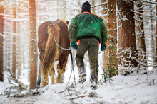 Hard Work Of Man And Horse In ...