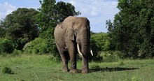 An Elephant Throws Ground On Him