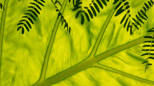 Spring Light Green Leaf. Cellular Natural Structure, Flora. Texture, Background For Natural Cosmetics