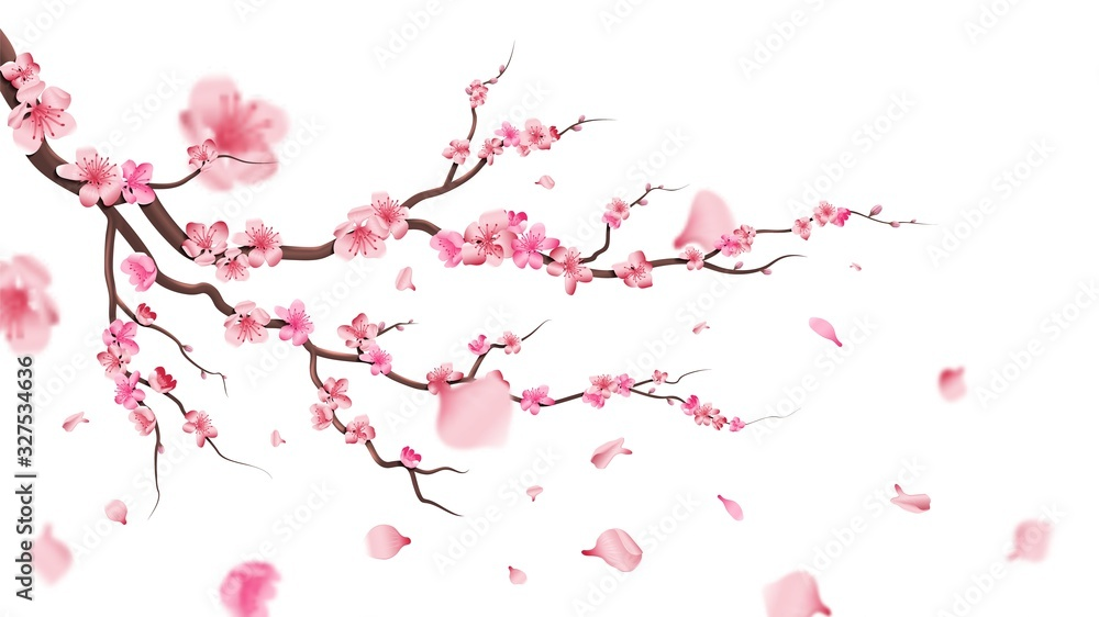 Fototapeta Sakura blossom branch. Falling petals, flowers. Isolated flying realistic japanese pink cherry or apricot floral elements fall down vector background. Cherry blossom branch, flower petal illustration
