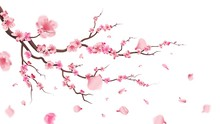 Sakura Blossom Branch. Falling...