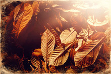 Beautiful Autumn Leaves, Leaf ...