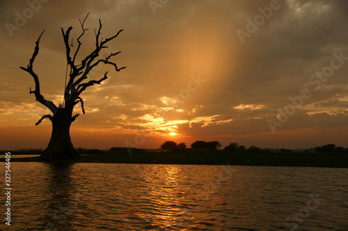 Fényképezés Black silhouette of single old branchy dried-up tree on background of orange sunset sky