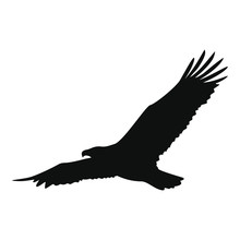 Black Eagle On A White Background In Vector EPS8