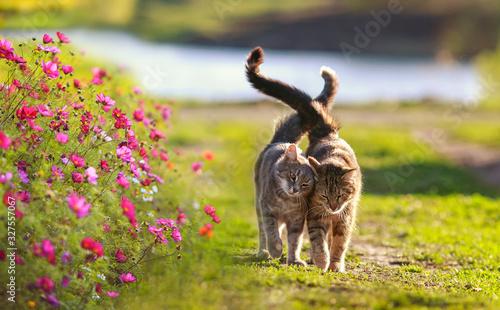 po zielonej trawie w słonecznym wiosennym ogrodzie wśród kwiatów spacerują dwie zakochane nierozłączki