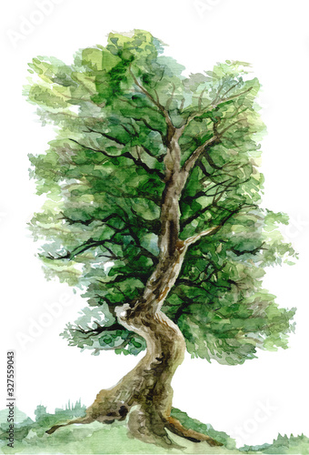 Fényképezés Tree painted by watercolor