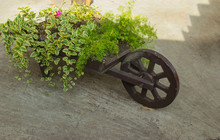 Flowerbed In The Form Of A Car...