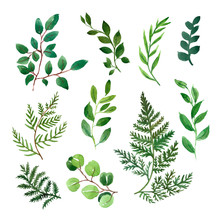 Watercolor Collection Of Greenery Foliage And Leaves On White Background. Green Herbs, Plant Branches Illustration.