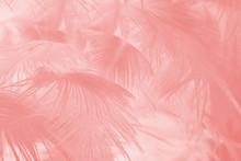 Beautiful Soft Pink Feather Pa...
