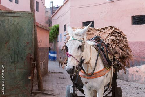Fototapety, obrazy: Einblicke ins Gerberviertel in Marrakesch, Marokko