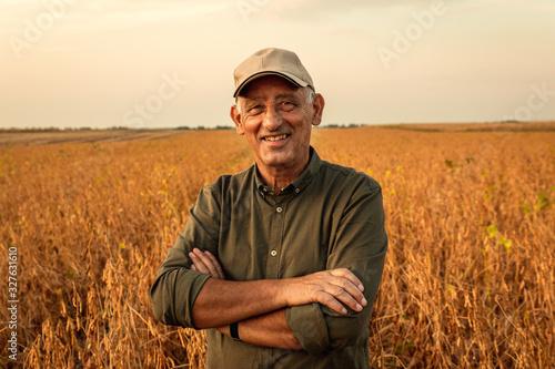 Fototapeta Portrait of senior farmer standing in soybean field examining crop at sunset. obraz