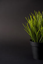 Green Grass In A Pot Isolated ...