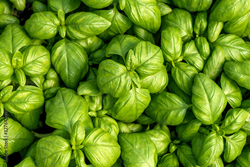Basil leaves as natural food background Poster Mural XXL